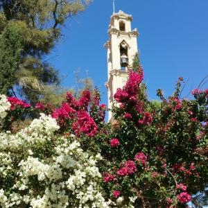 cyprus-flowers